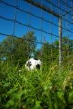 Balón de fútbol blanco y negro en la meta de un campo de fútbol de la hierba verde en verano fotos de archivo libres de regalías