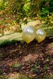 Balões dourados fora Fotos de Stock Royalty Free