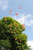 Balões vermelhos com cartões das felicitações Imagem de Stock