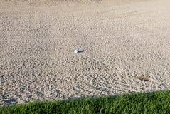 Bal di golf nel separatore di sabbia Immagine Stock