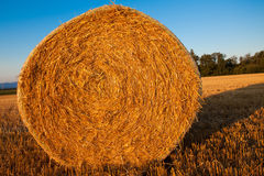 Bala da palha do trigo Imagens de Stock