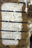 Bala de algodón Foto de archivo