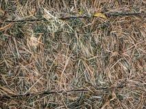 Bala de heno Fotografía de archivo libre de regalías