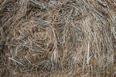 Bala de heno de hierba secada Fotos de archivo libres de regalías