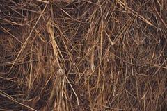 Bala de heno de hierba secada Imagen de archivo