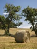 Bala de heno en campo cosechado Imágenes de archivo libres de regalías