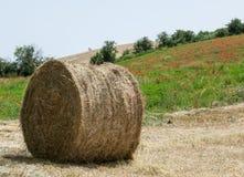 Bala de heno en el campo después de la cosecha imágenes de archivo libres de regalías