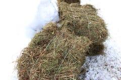 Bala de heno en nieve fotografía de archivo