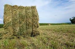 Bala de la alfalfa foto de archivo