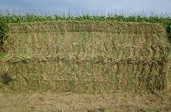 Bala de la alfalfa Foto de archivo libre de regalías