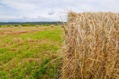 Bala de paja en campo agrícola cosechado imagen de archivo