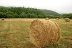 Bala redonda del heno de cereal secado del trigo Imagenes de archivo