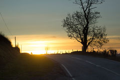 Bala Road. Photo taken: Bala shows a sunset over a road with an oak tree in the foreground Stock Image