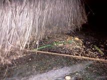 Balai et poussière Photo libre de droits