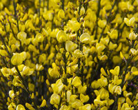 Balai jaune images stock