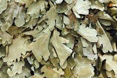 Balai sec de feuilles Photographie stock libre de droits