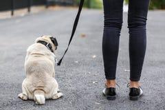 Balais de chien de Cutie marchant avec le propriétaire dehors Concept d'animal familier Image libre de droits