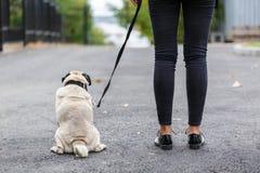 Balais de chien de Cutie marchant avec le propriétaire dehors Concept d'animal familier Images libres de droits