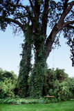 Balanço da árvore Foto de Stock Royalty Free