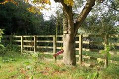 Balanço da árvore Imagens de Stock Royalty Free