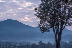 Balanço da árvore de Mari Pai em Pai, Tailândia imagens de stock