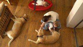Balanço do menino na sala de visitas Mãe com filho do bebê e dois cães Tiro Handheld video estoque