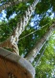 Balanço do olhar do close-up Imagens de Stock
