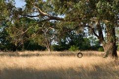 Balanço do pneumático Fotos de Stock Royalty Free