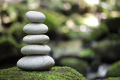 Balanço e harmonia na natureza Fotografia de Stock Royalty Free