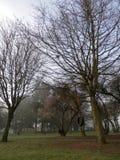 Balanço no parque, manhã nevoenta da árvore do pneumático da mola foto de stock