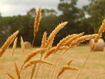 Balanço no vento Foto de Stock
