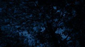 Balanço superior da árvore no vento na noite filme