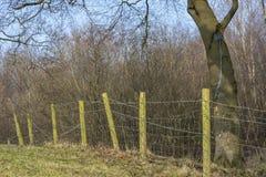 Balanço velho 1 da árvore Imagens de Stock
