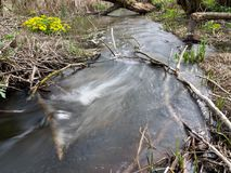 About balance of coexistence. At the sources of the beaver dam. Benefit for nature, harm for people Royalty Free Stock Images