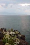 Balance flores selvagens na costa do lago de Sevan em Armênia Foto de Stock
