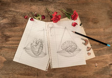 Balance:heart or brain. Red roses ,dried rose petals, pencil and a drawing of a balance with heart and brain Royalty Free Stock Photography