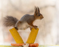 On the balance of maize Stock Photography