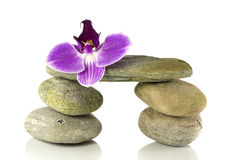Balance rocks with orchid Royalty Free Stock Photo