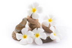 The balance stones with Frangipani flower is zen. The isolated of the balance stones with Frangipani flower is zen for spa on white background Stock Image