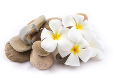 The balance stones with Frangipani flower is zen. The isolated of the balance stones with Frangipani flower is zen for spa on white background Royalty Free Stock Images