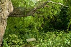 Balance a suspensão sob o ramo de árvore em uma área verde Fotografia de Stock Royalty Free