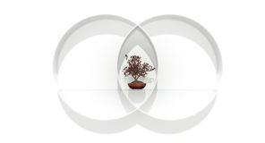 Balanced. Balance equal divided circle bonsai tree plant shelf glass red green white wall Stock Photography
