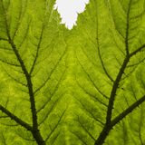 A balanced leaf stock photography