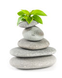 Balanced spa stones with plant Royalty Free Stock Photo