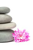 Balanced stones with flower Royalty Free Stock Photography