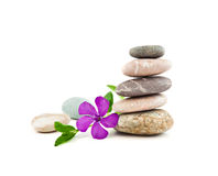 The balanced stones and gentle flower. On a white background Royalty Free Stock Photography