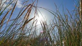 Balancement dans le vent Photo libre de droits