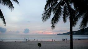 Balancement tropical de palmiers en vent au coucher du soleil banque de vidéos