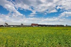 Balanceo del tren más allá del campo del Canola debajo del cielo azul imagen de archivo