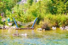 Balancez accrocher près de la rivière d'Azmak avec les oies blanches, Akyaka, Mugla image libre de droits